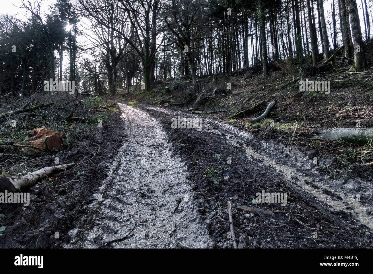 A very muddy track through woodland, where heavy machinery has churned up the earth - Stock Image