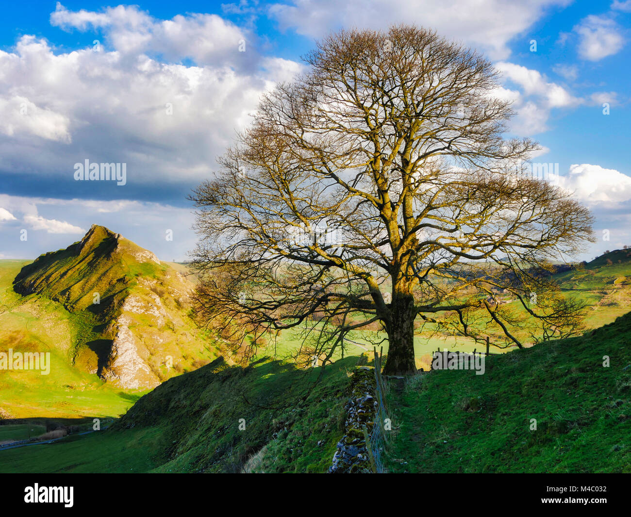 Tree on Chrome Hill with view over towards Parkhouse Hill, near Buxton, Peak District National Park, Derbyshire, - Stock Image