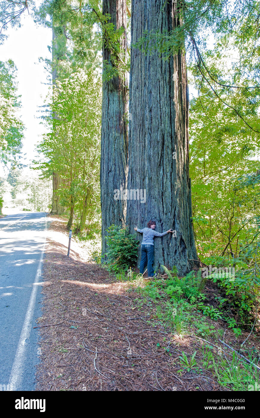 a mature woman standing among the towering sequoias in Northern California Stock Photo