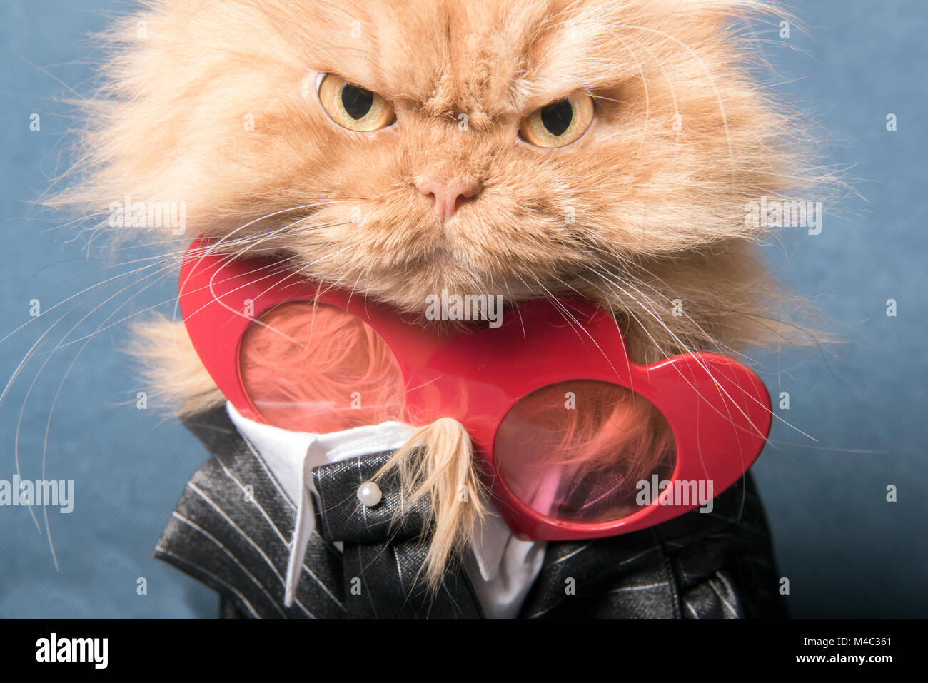 Close up portrait of orange Persian cat with heart shape glasses - Stock Image