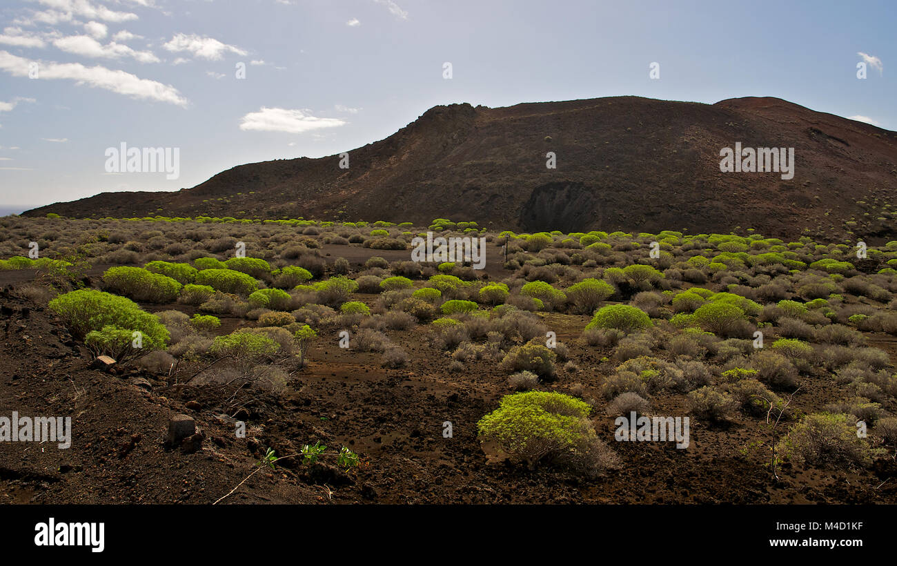 Panoramic view of Orchilla volcanic cinder cone at Punta de la Orchilla, with endemic Euphorbia plants, at El Hierro Stock Photo