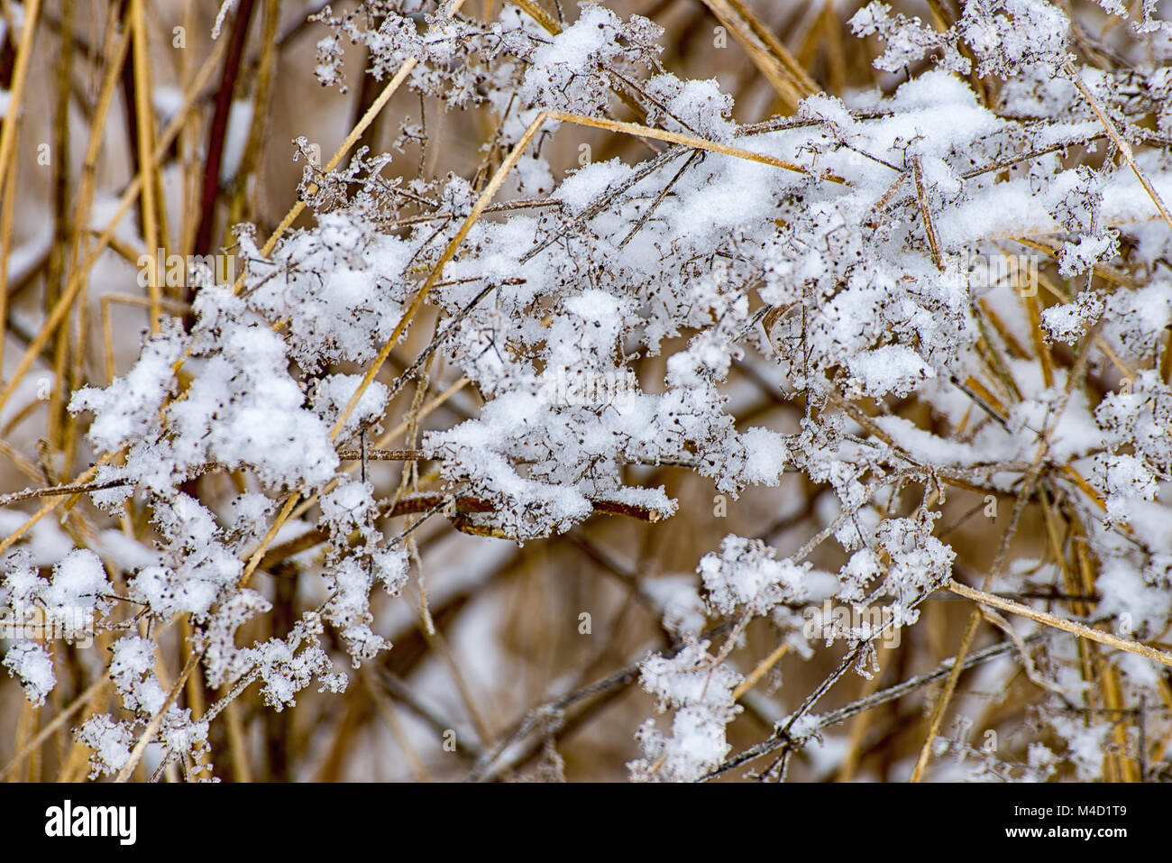 Icy meadow in the winter at the village - Stock Image