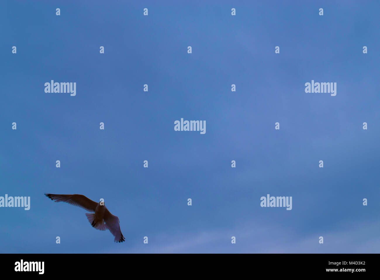 Bird - Stock Image