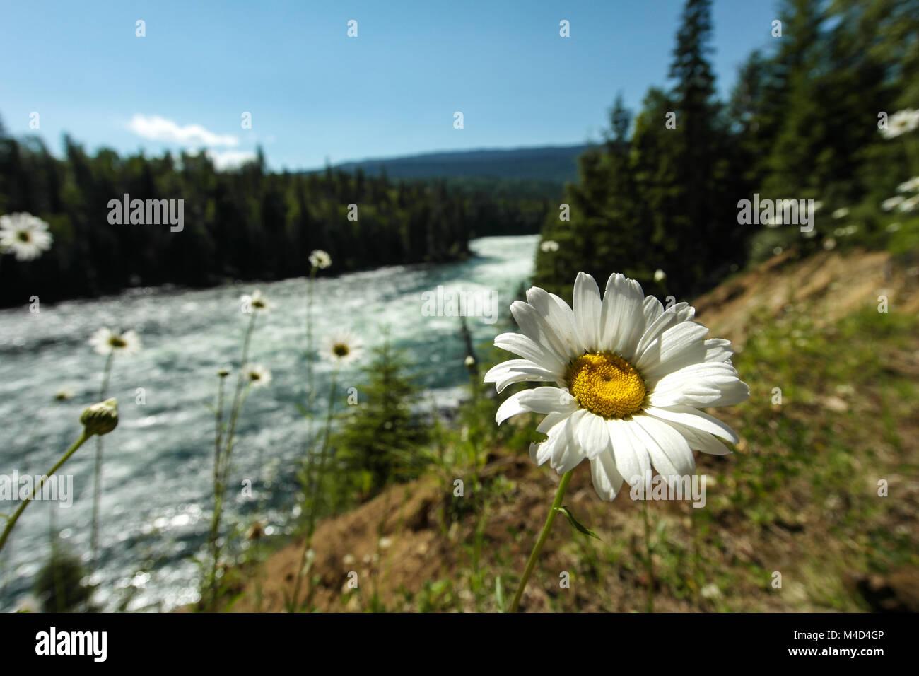 Tannenarten Weihnachtsbaum.Tannenarten Stock Photos Tannenarten Stock Images Alamy