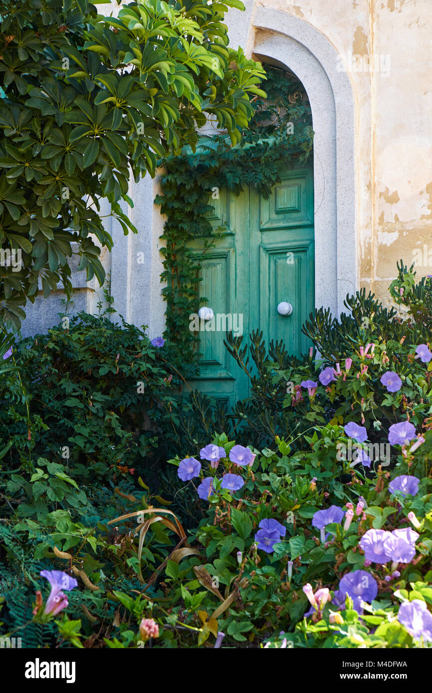 Ivy-covered green door in the wall of old house. Malta Stock Photo