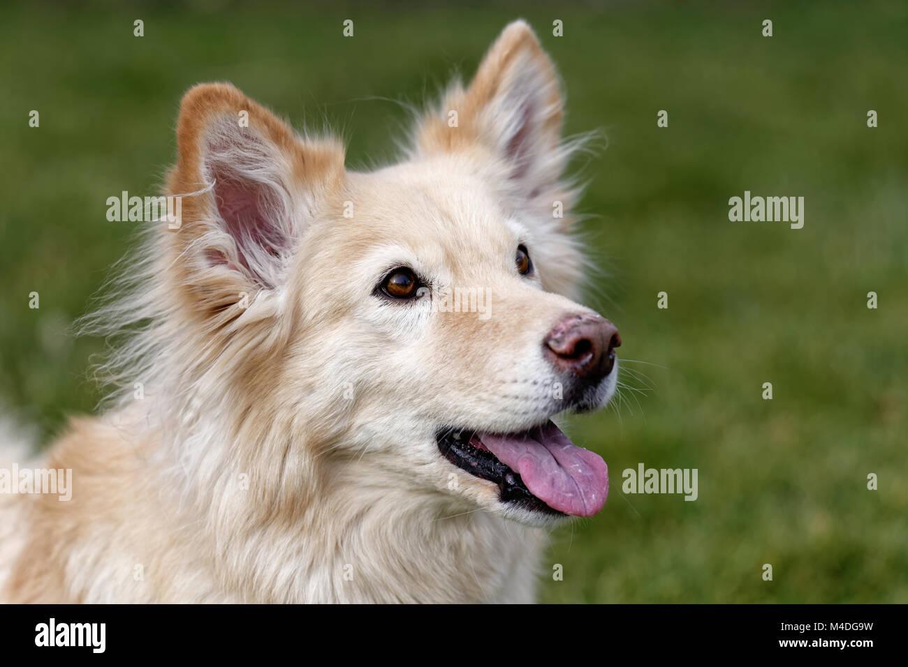 Saved spanish dog - Stock Image