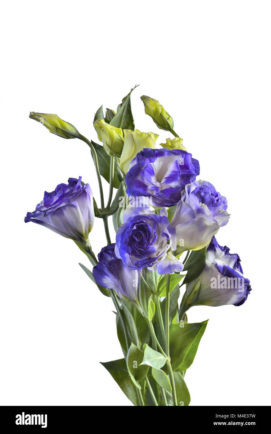Bouquet of Eustoma flowers isolated on white Stock Photo