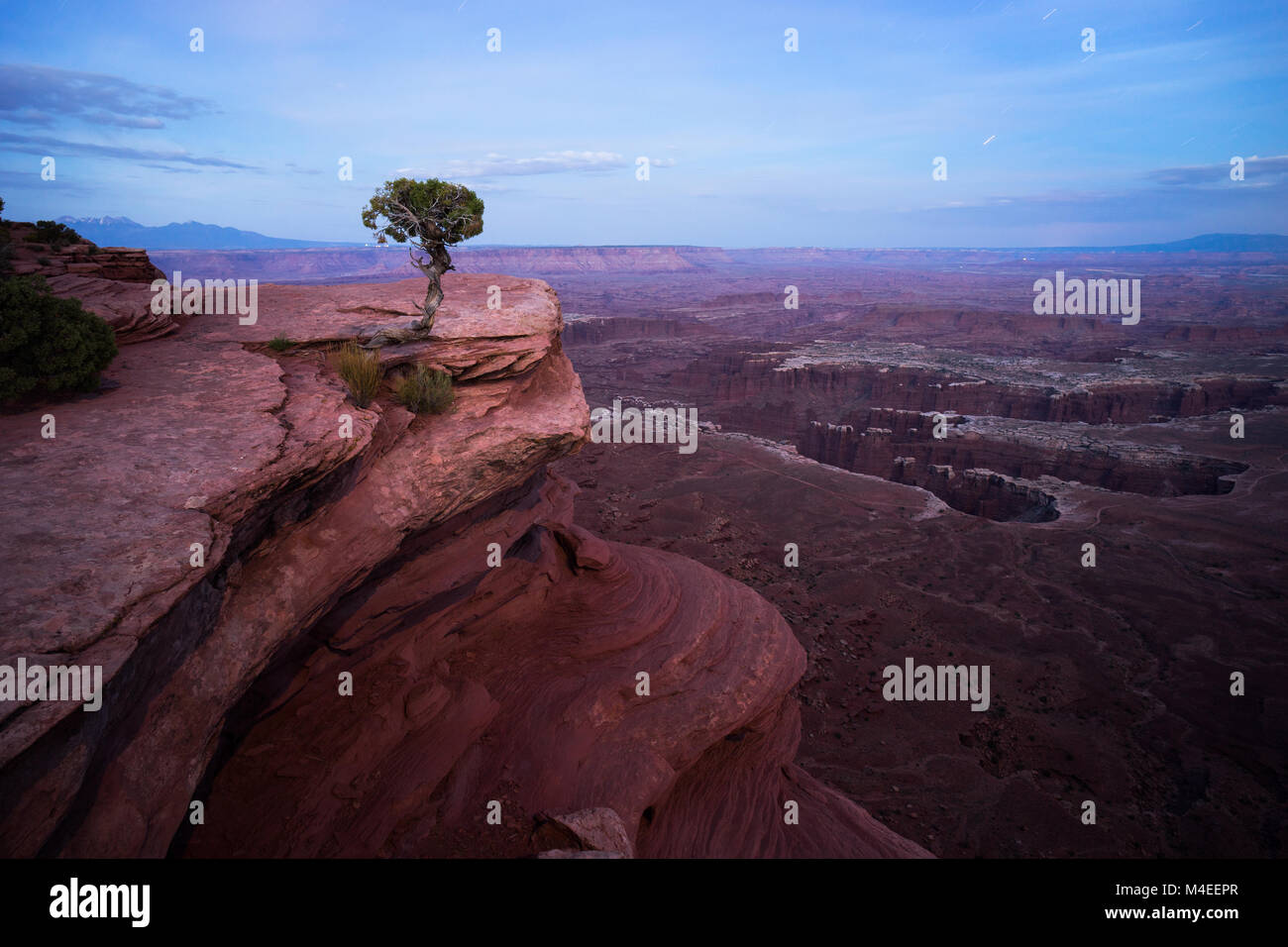 Lone tree,Monument Basin,Grandview Point Trail,Utah,America,USA - Stock Image