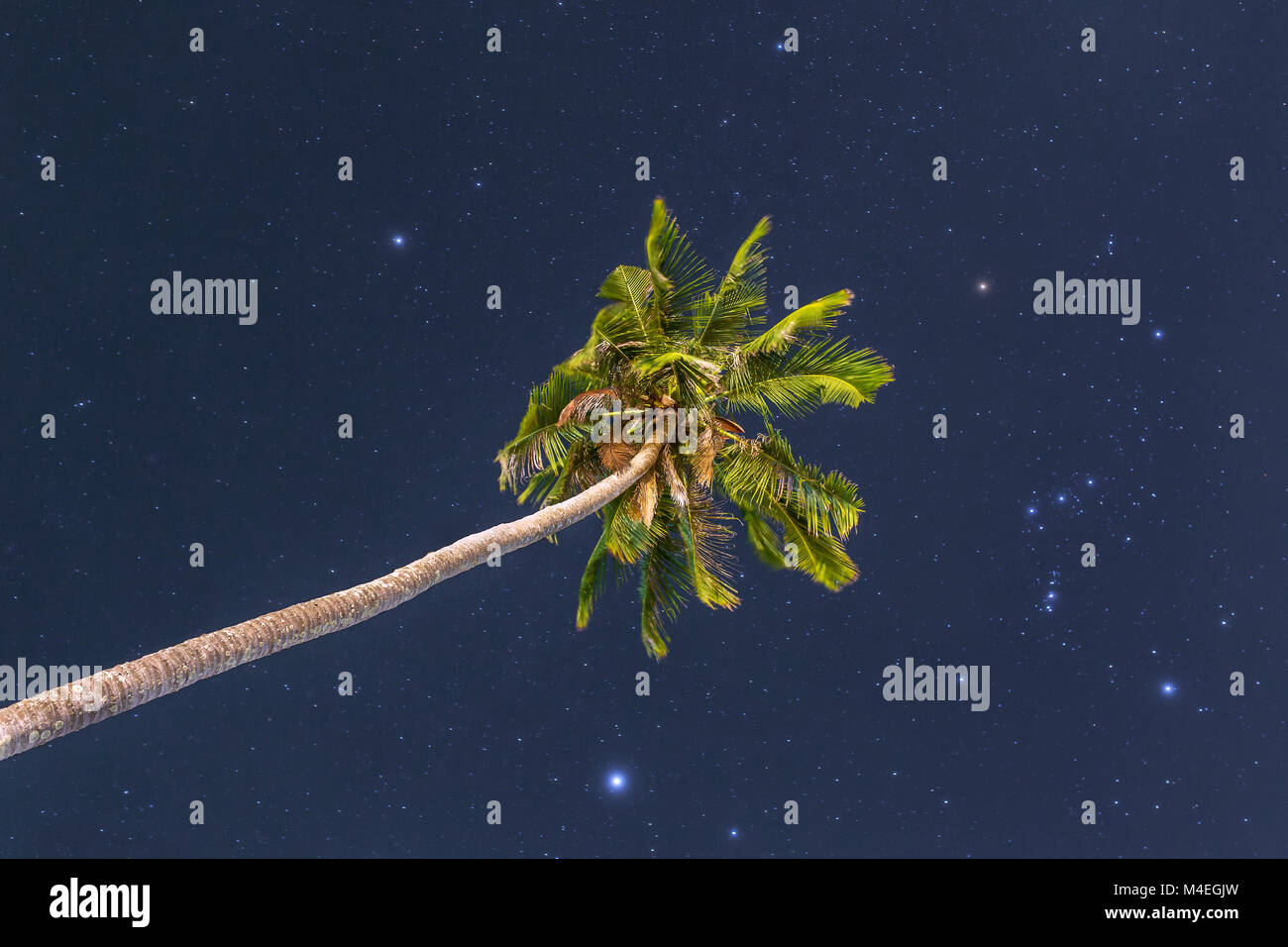 Single palm tree at night sky with stars - Stock Image