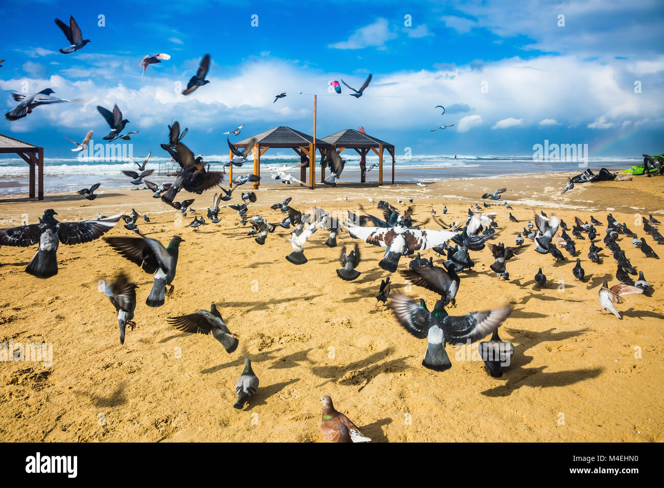 Flock of pigeons it is noisy departs - Stock Image