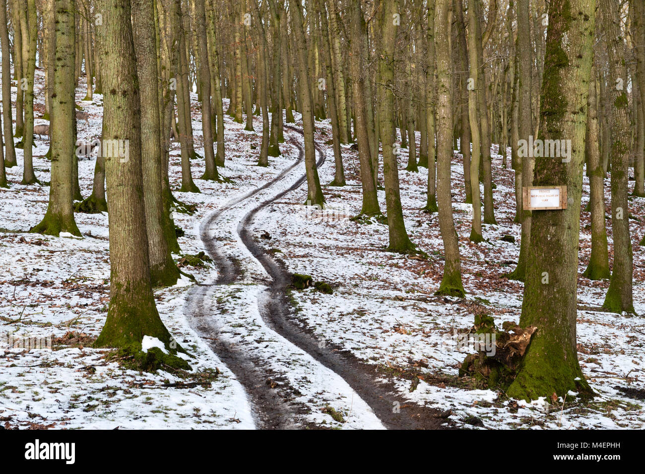 Wales, UK. A track winding through a forest in winter with a sign reading 'private - no public right of way' - Stock Image