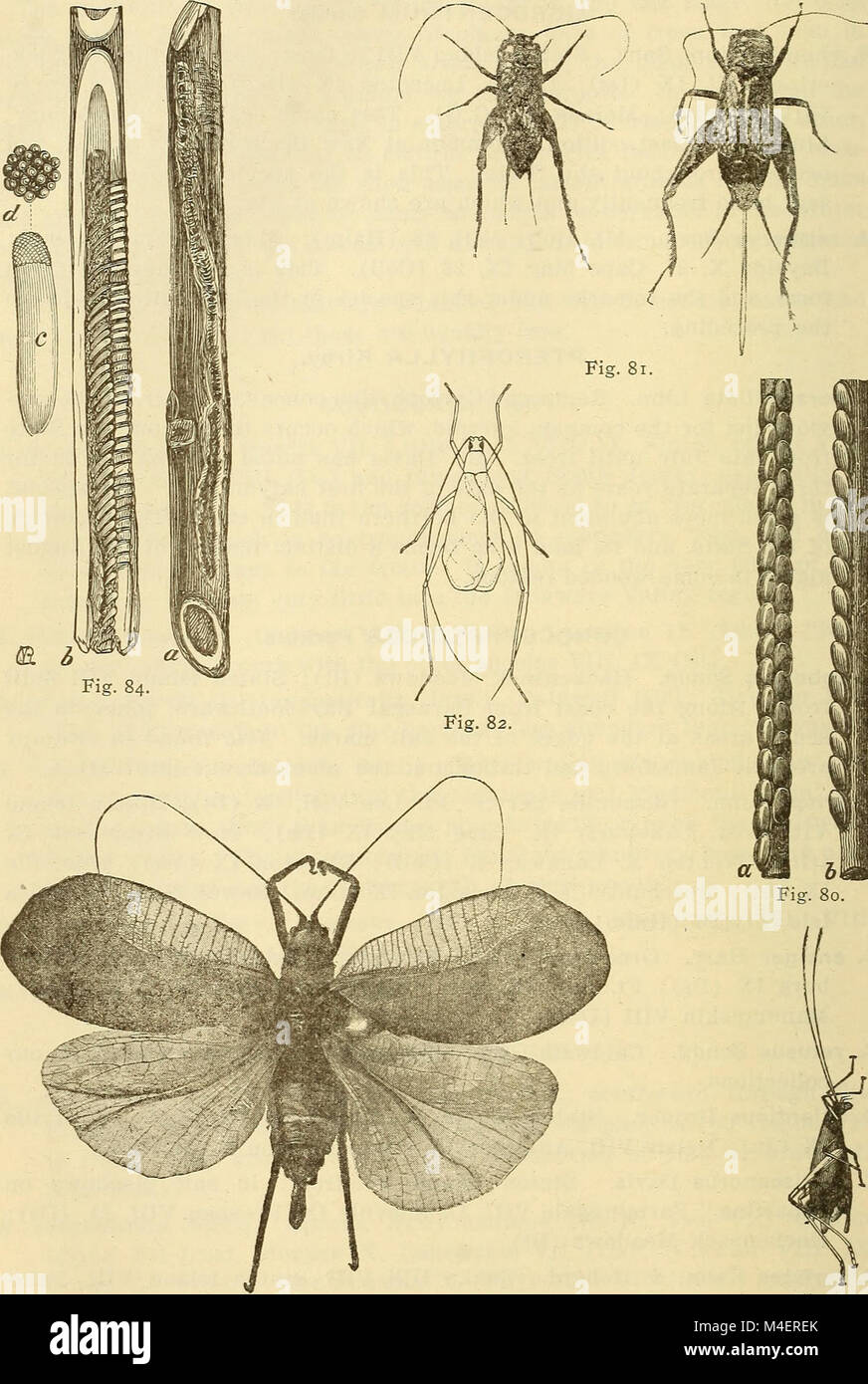 Annual report, including a report of the insects of New Jersey, 1909 (1910) (18243891640) Stock Photo