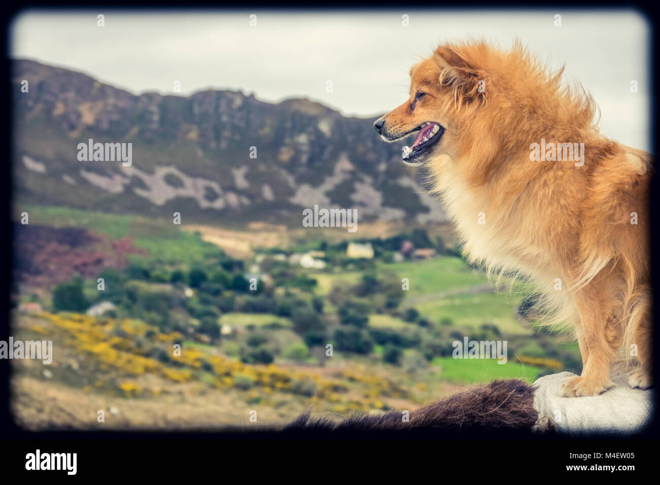 Cute brown dog and rural landscape Stock Photo