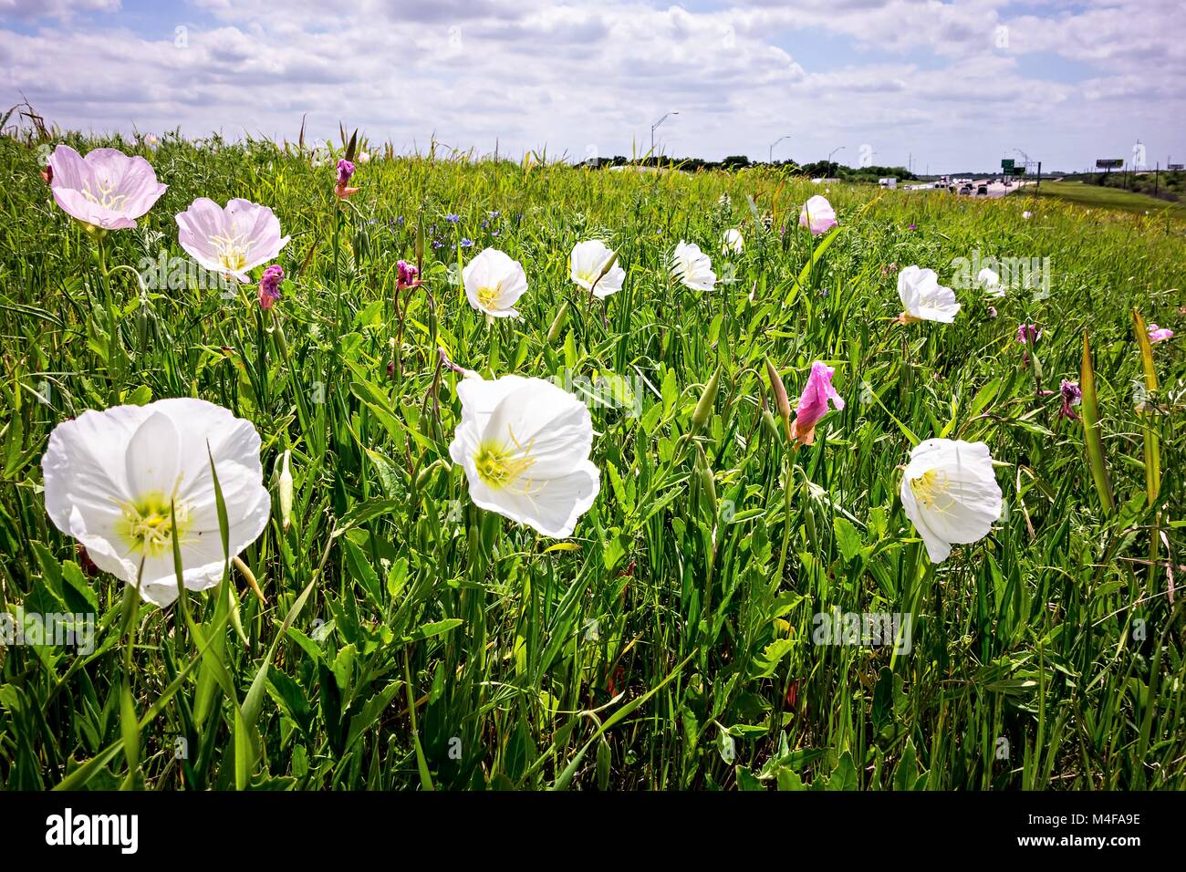 Spring In Texas Stock Photos Spring In Texas Stock Images Alamy