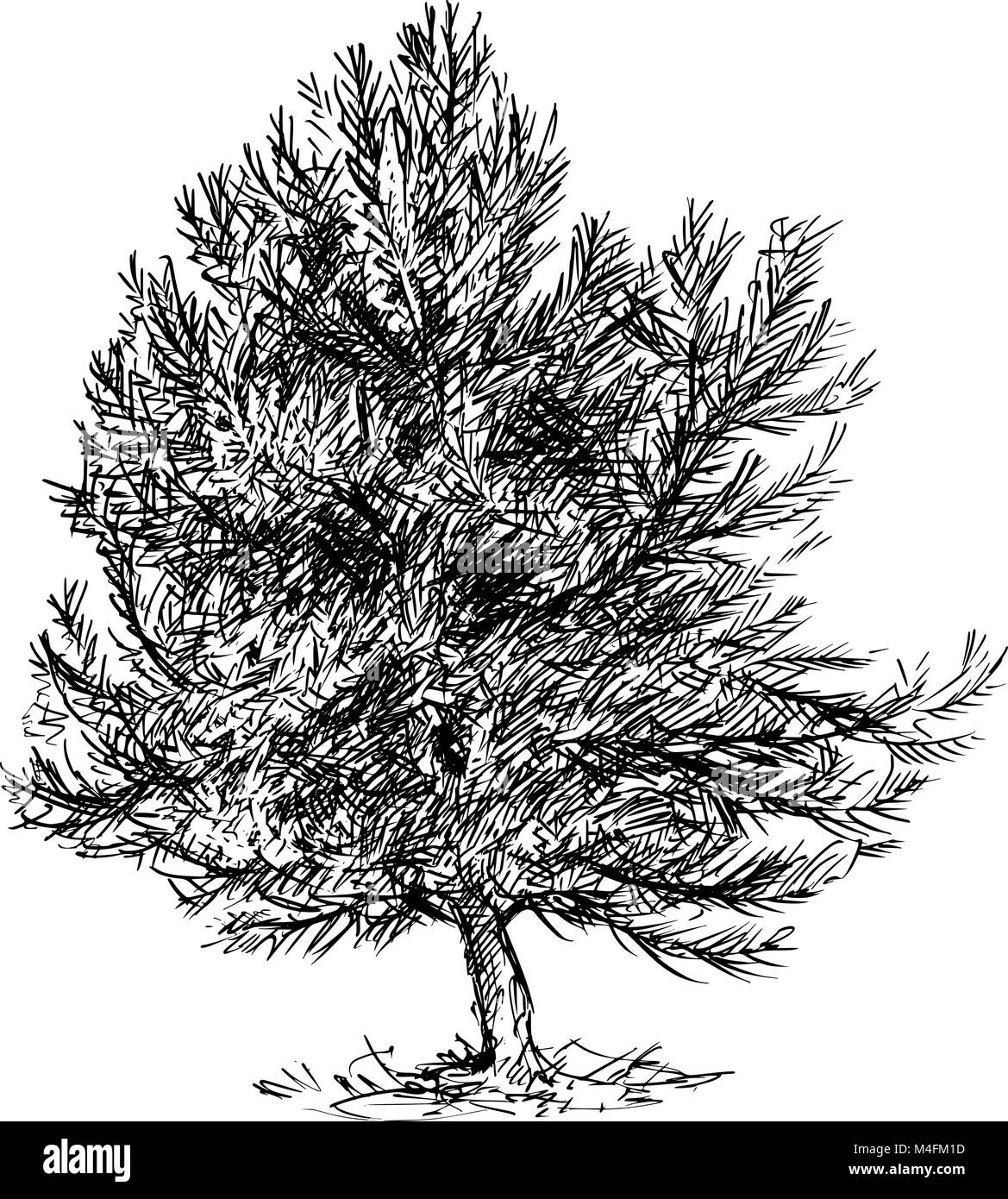 Cartoon Vector Drawing of Pine Conifer Tree - Stock Image