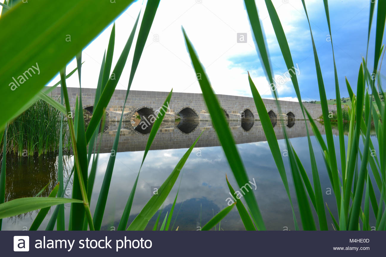 among sedges mystical and mysterious Bridge - Stock Image