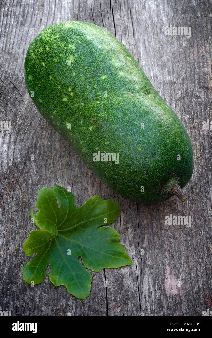 Asian Winter Gourd A Rare /& Delicious Gourd//Melon from South-east Asia
