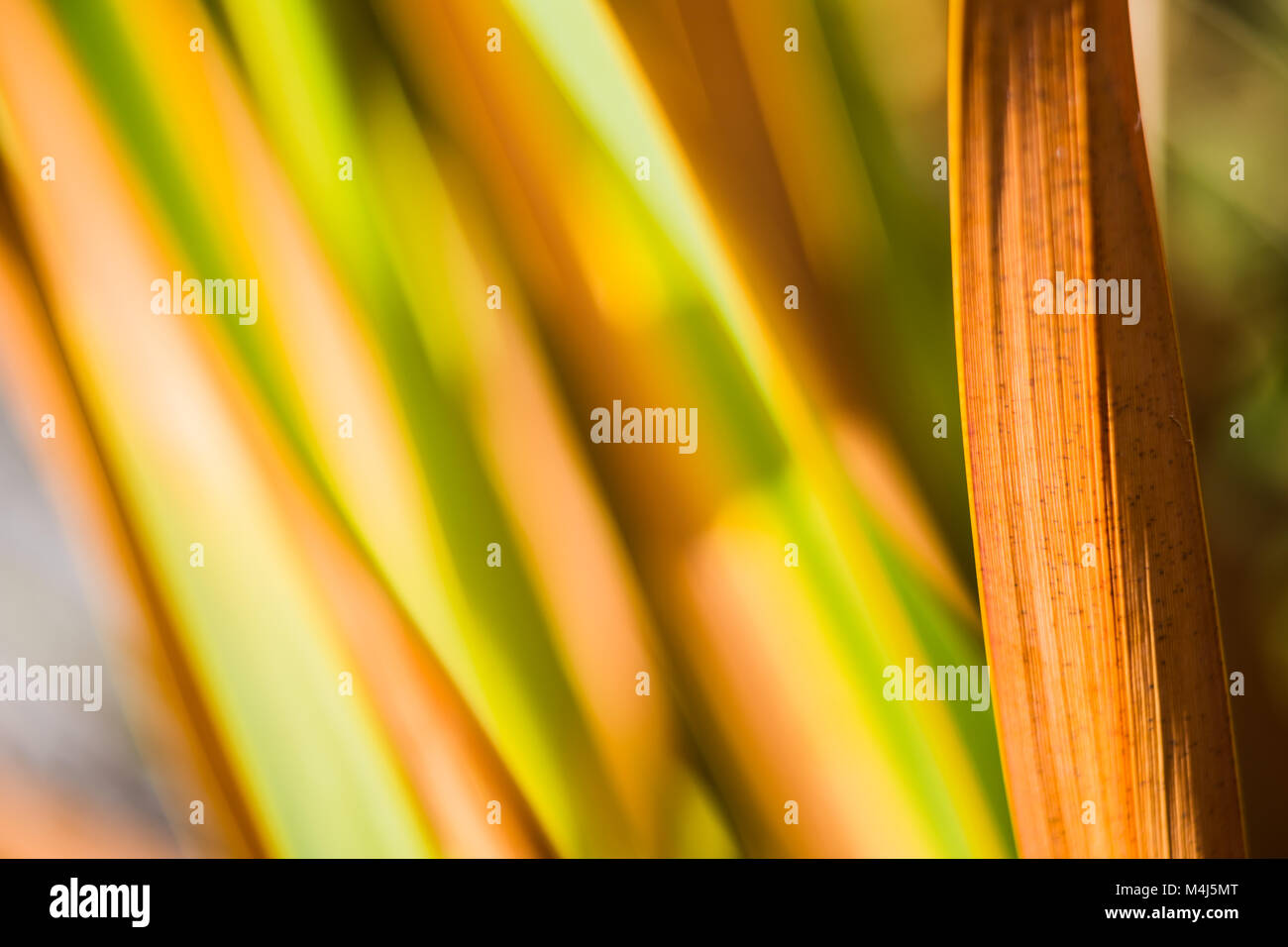 shape, lines and texture of a leaf on an unfocused background in autumn - Stock Image