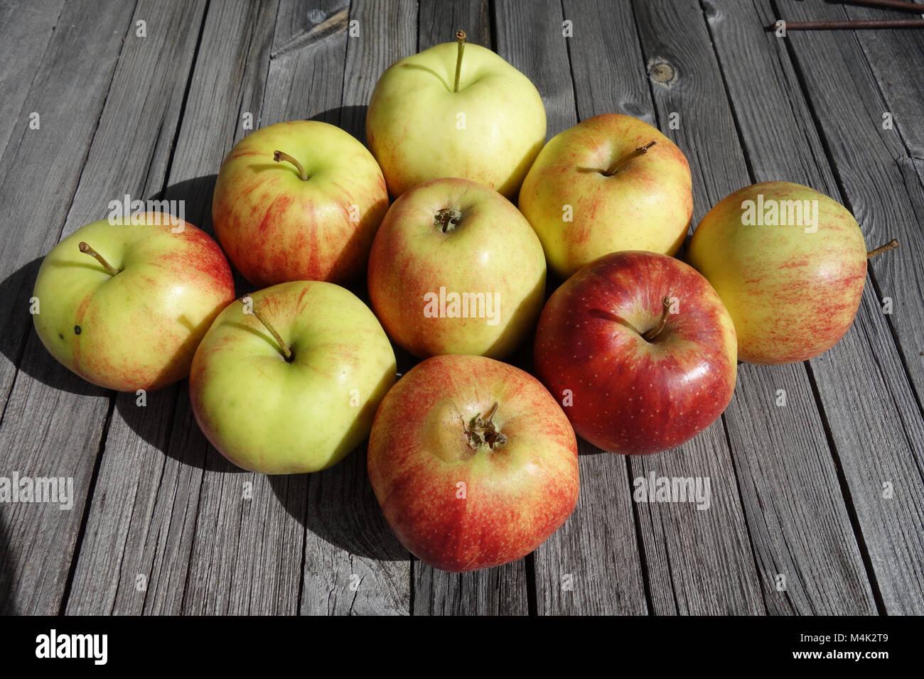 Malus domestica Jonagored, apple-sort - Stock Image