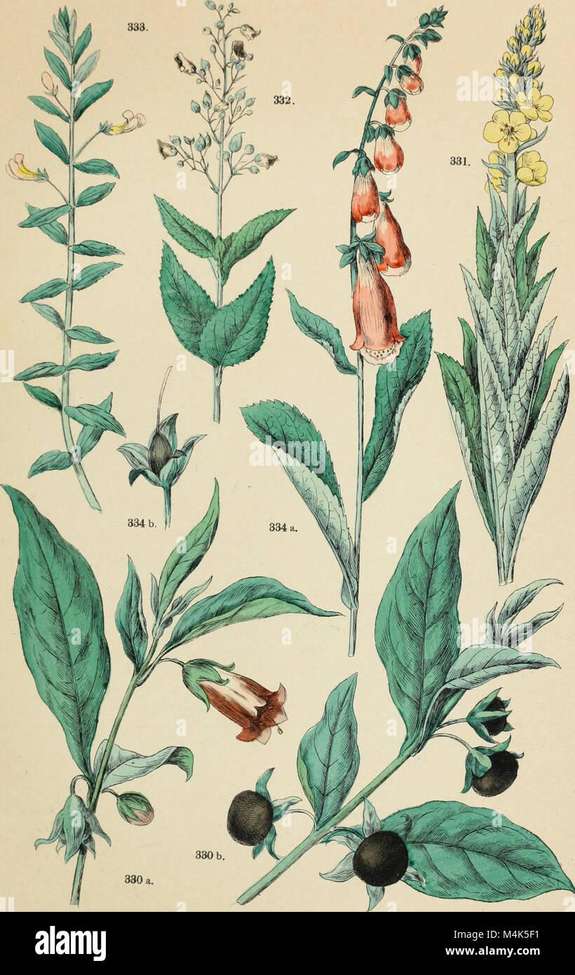Atlante botanico; secondo il sistema naturale di De Candolle; 85 tavole miniate con testo esplicativo ridotto a Stock Photo