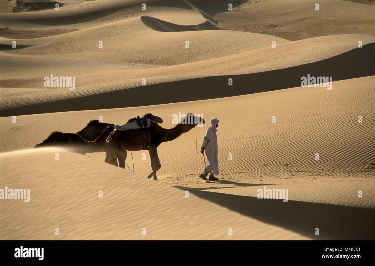 Algeria. Near Timimoun. Western Sand Sea. Grand Erg Occidental. Sahara desert. Bedouin walking with camels. Sand - Stock Image