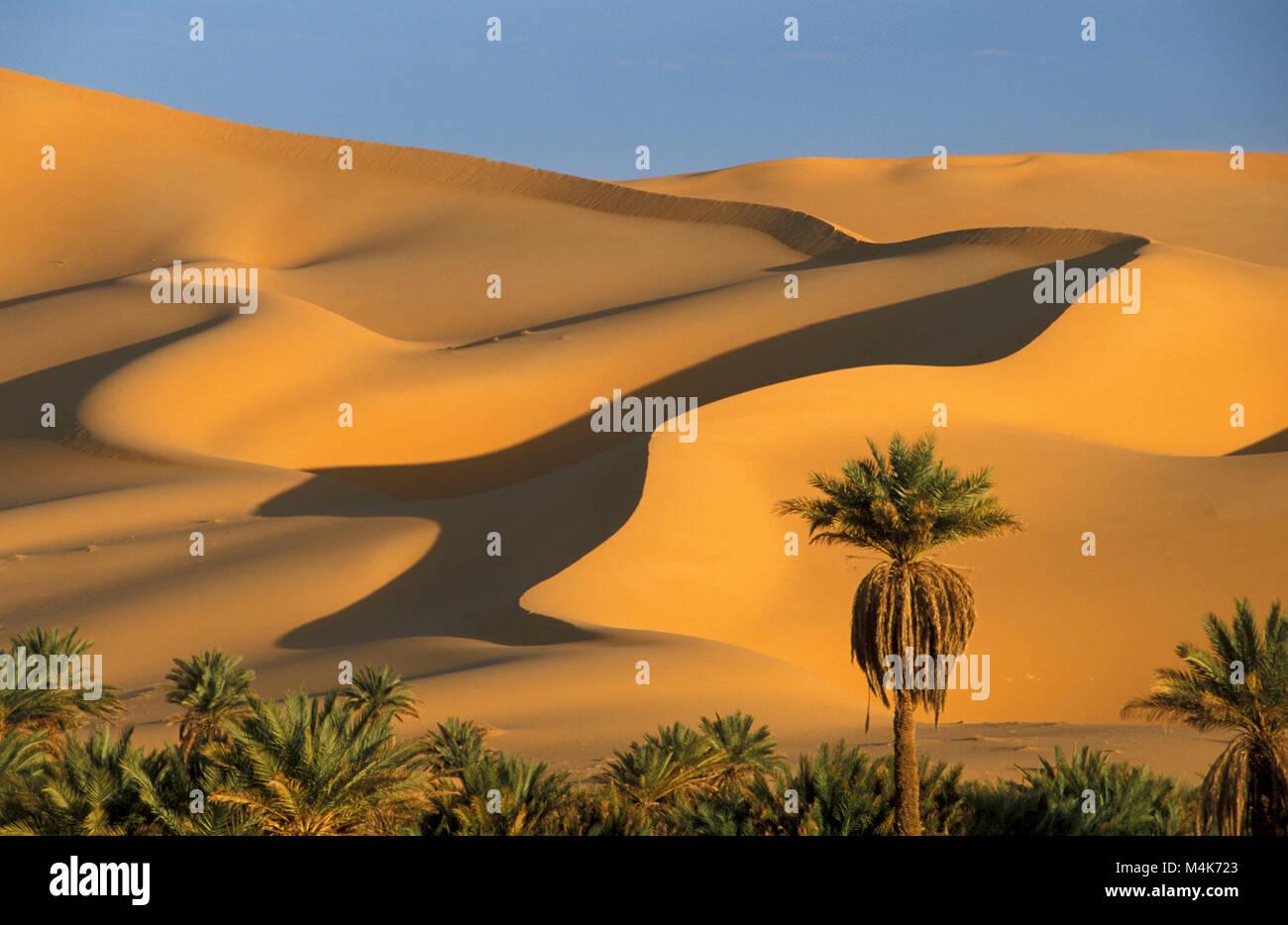 Algeria. Taghit or Tarit. Western Sand Sea. Grand Erg Occidental. Sahara desert. Sand dunes. Sand Sea. Palm trees. - Stock Image
