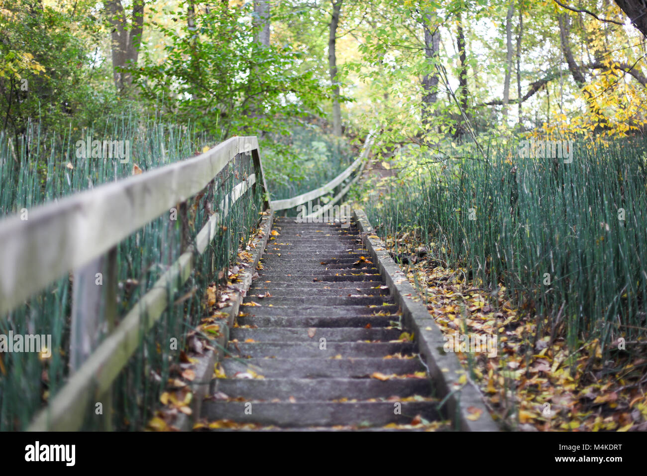 Wooden stairs with leading lines in the fall surrounded by green foliage - Stock Image