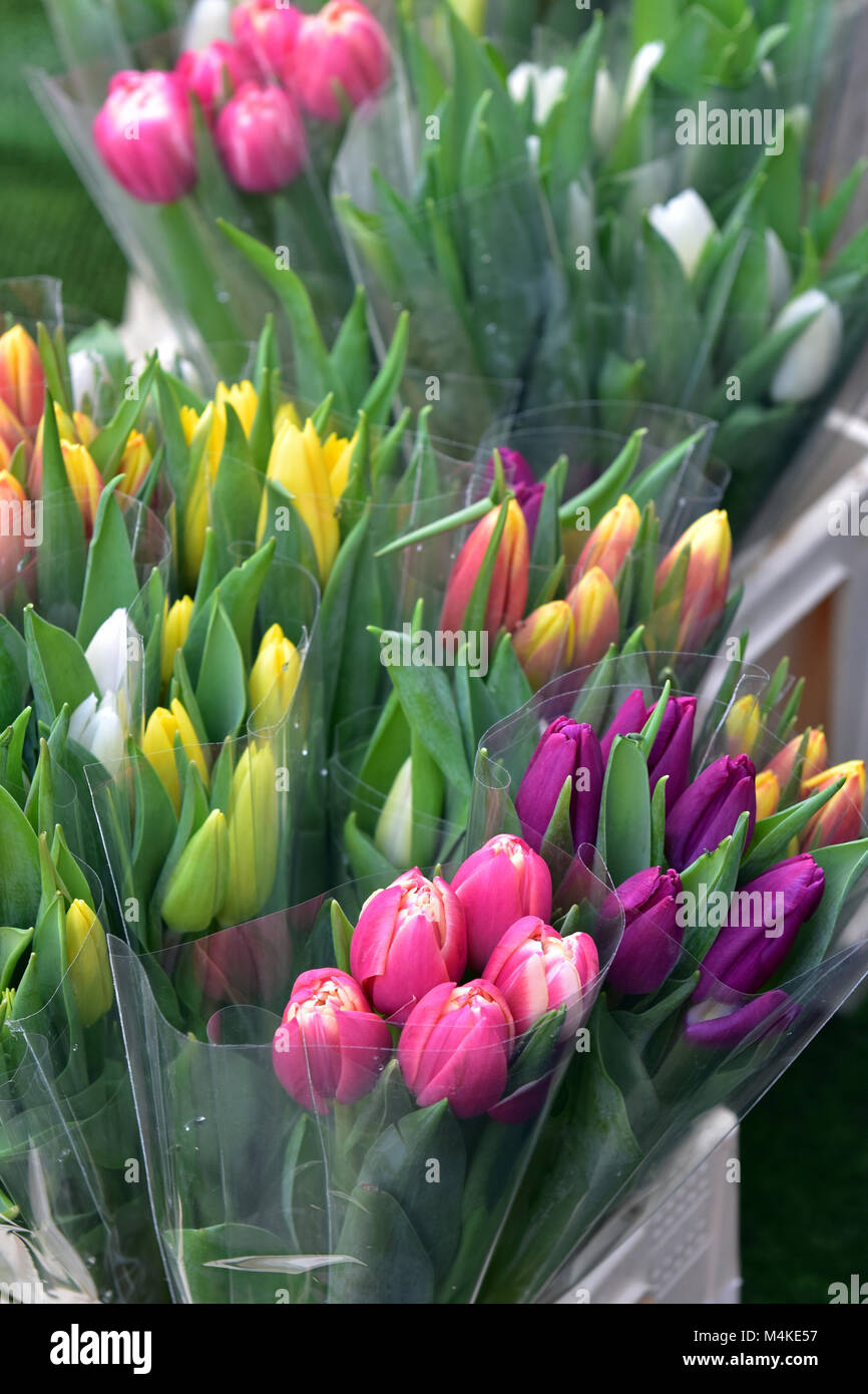 a variety or selection of different coloured tulips in bunches for sale at a florists shop in springtime. spring - Stock Image