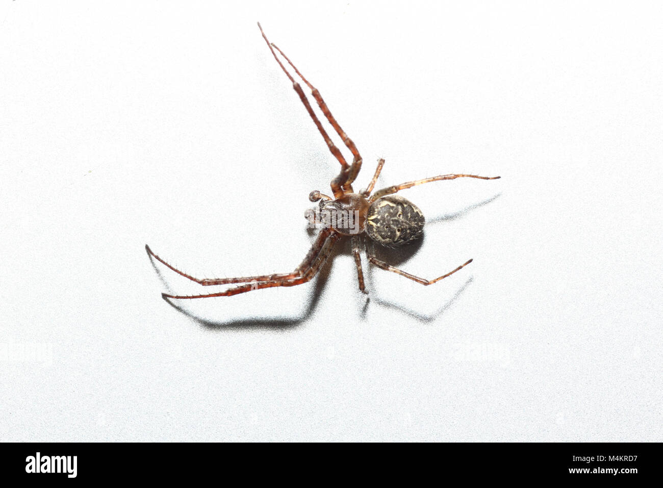 Mosquito Larvae Stock Photos & Mosquito Larvae Stock Images - Alamy