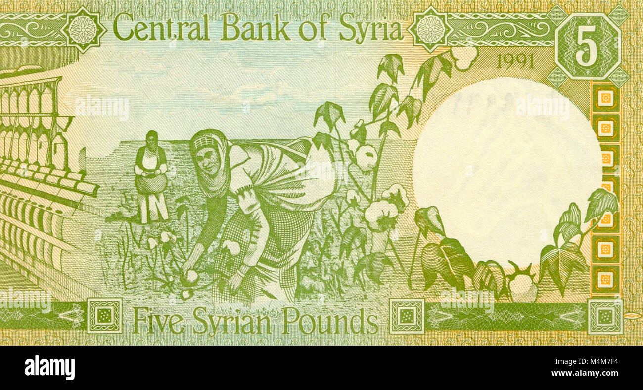 Syria Five 5 Pound Bank Note - Stock Image