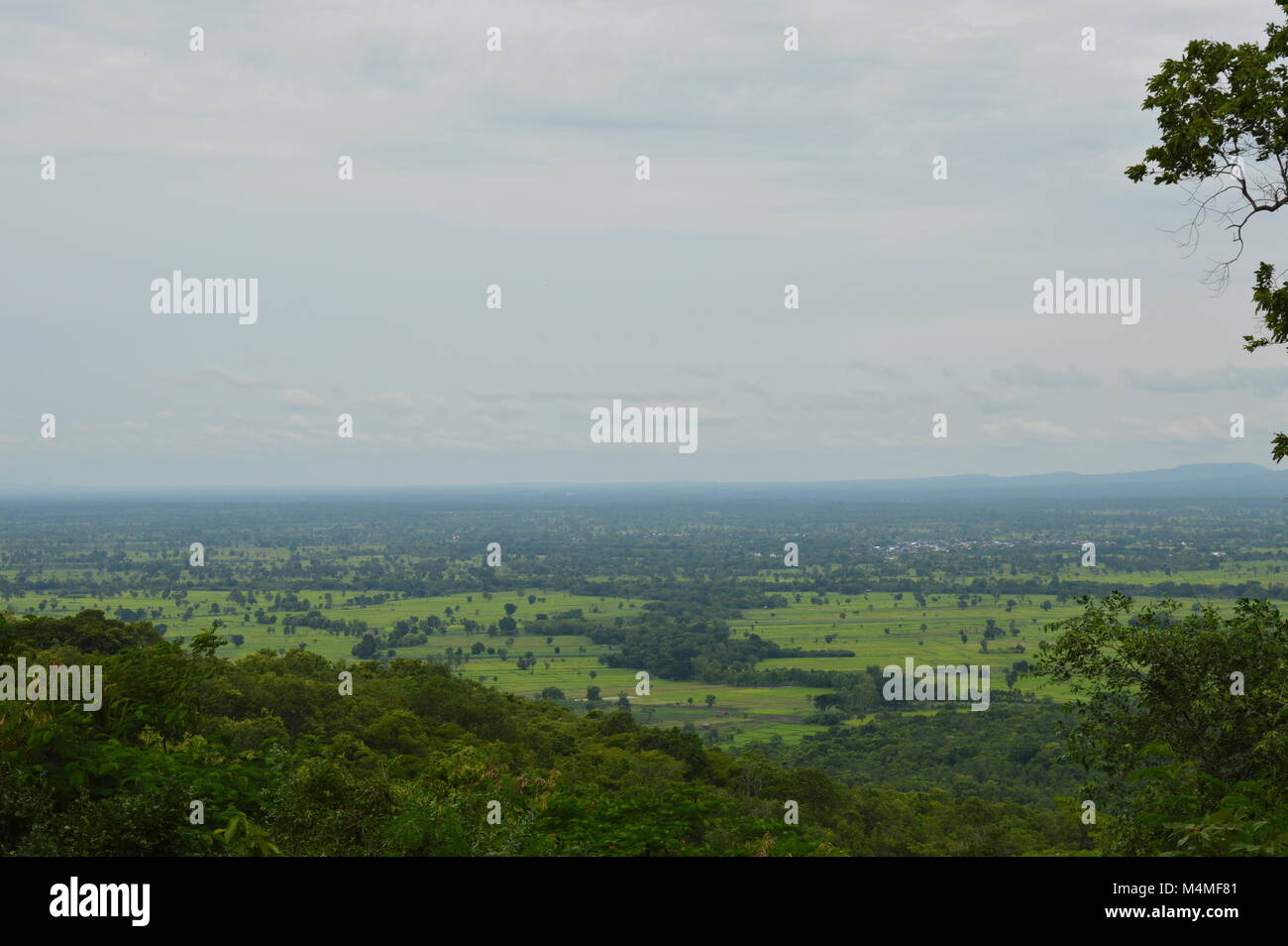 landscape of Thailand cultivate - Stock Image