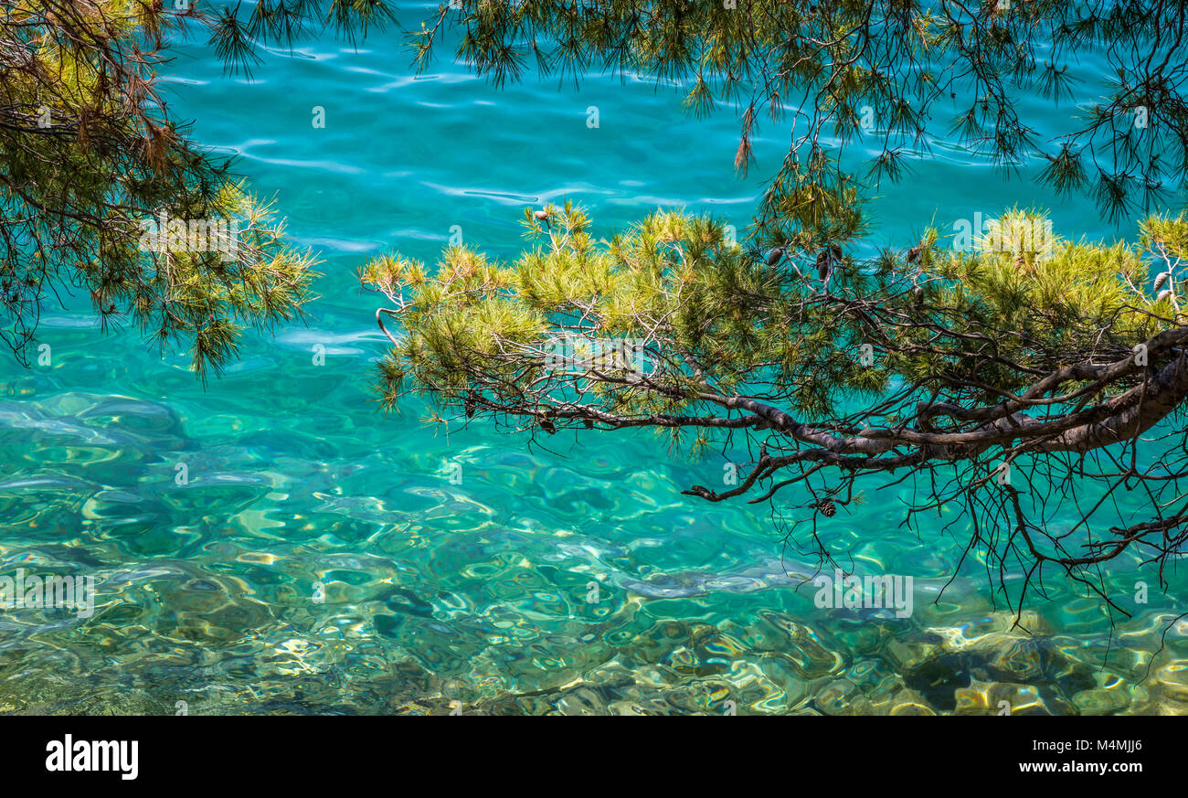 Aleppo pine branches contrast with the turquoise waters of Jezero Malo the small sea lake on the island of Mljet - Stock Image