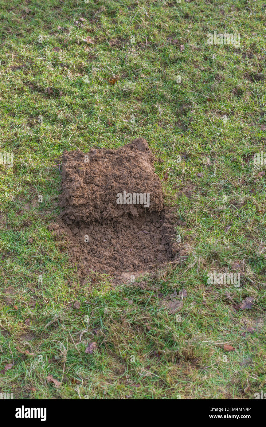 Grass Turf Cut Away To Form A Shallow Pit For A Covert Survival Fire Stock Photo Alamy