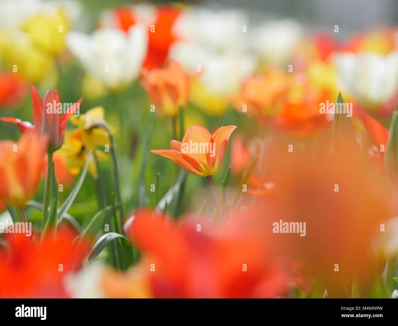 Macro of bright flowers - Stock Image