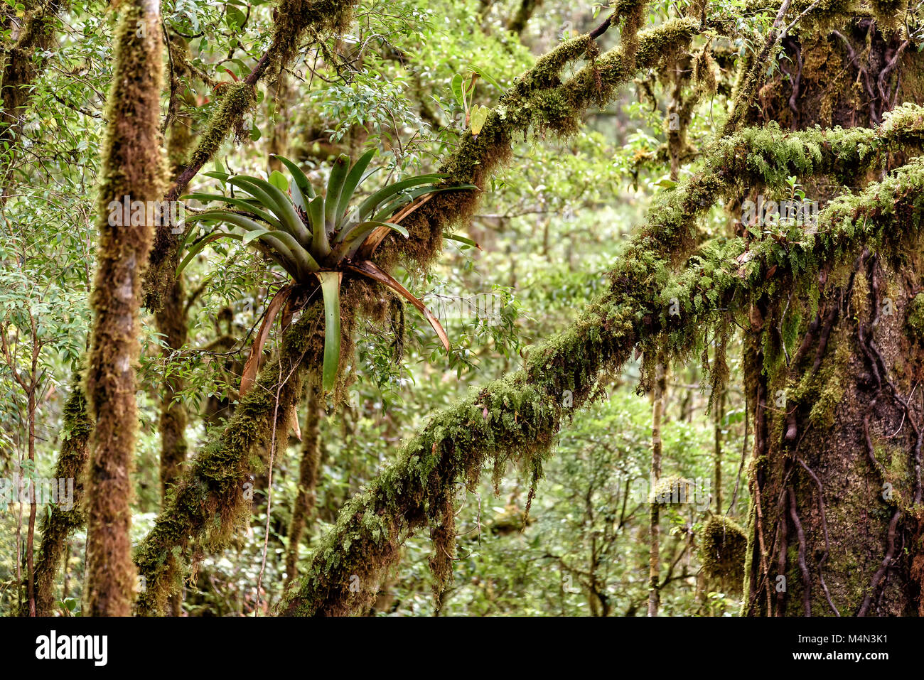rainforest in Costa Rica, central america - Stock Image