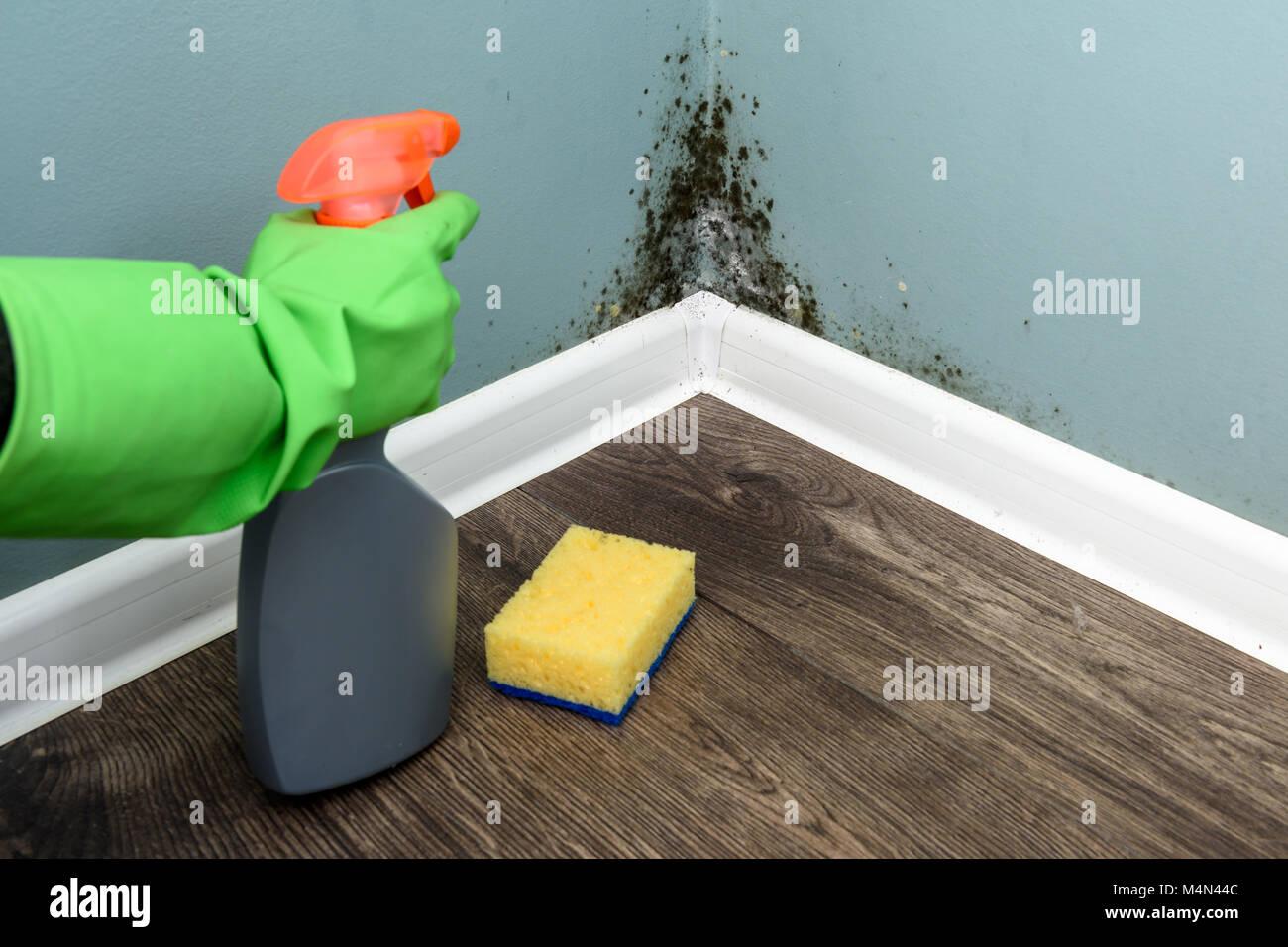 Spray bottle and sponge near black mould wall - Stock Image