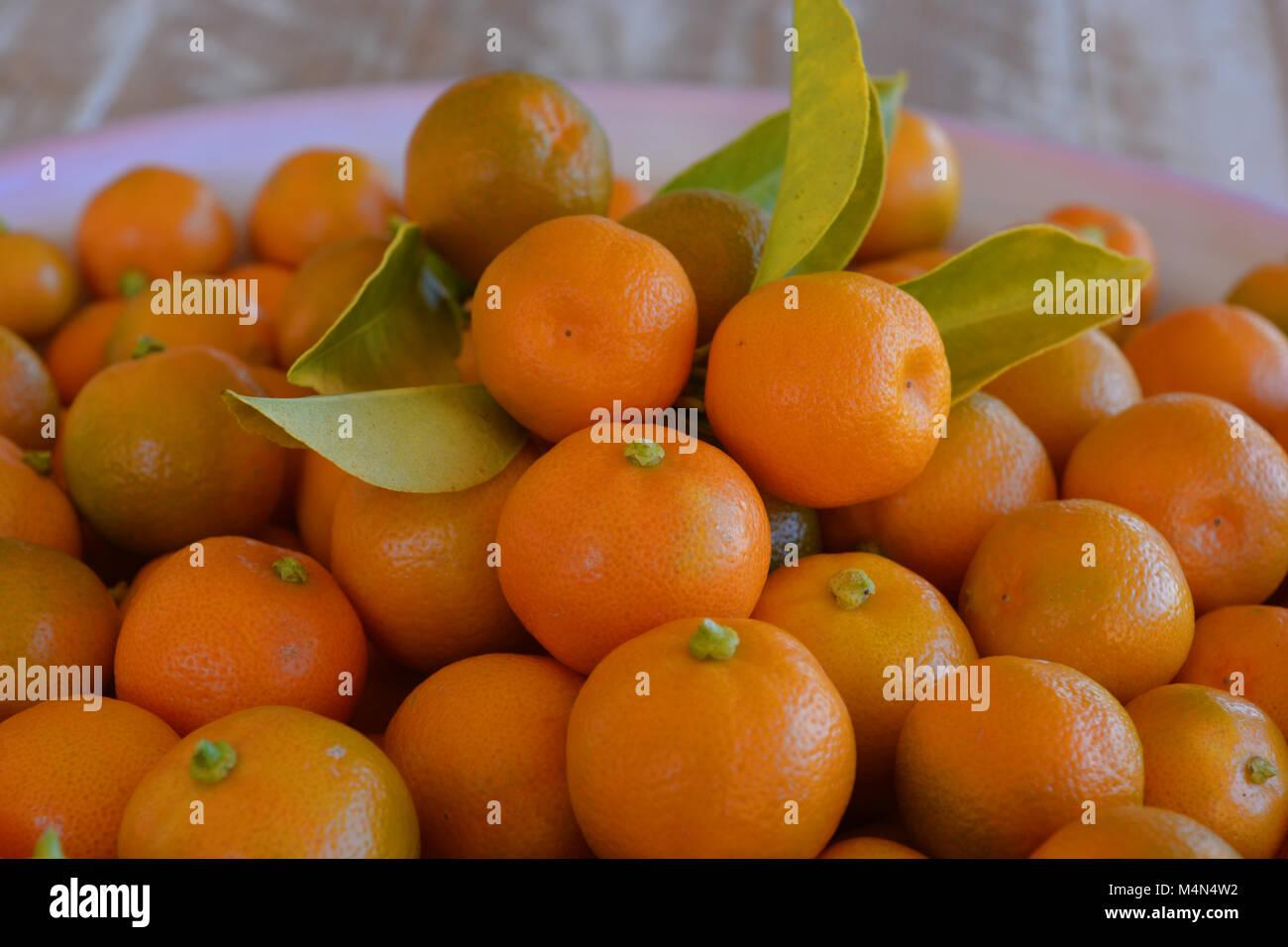 S E C Stock Photos Images Alamy Limau Kasturi Original New Also Known As Kalamansi Or Calamondin Scientific Name Citrus Microcarpa