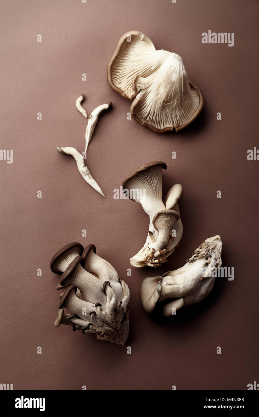 Oyster mushrooms on brown background. Natural lighting. Monochromatic concept - Stock Image