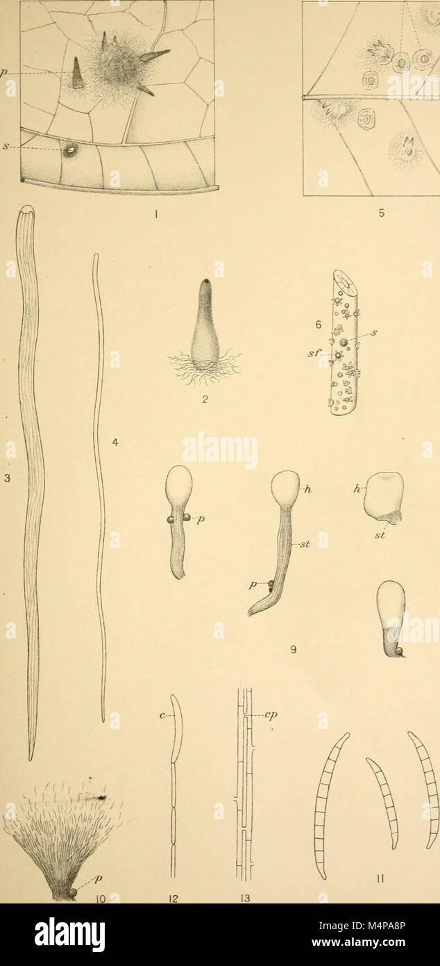 Annals of the Royal Botanic Gardens, Peradeniya (1901-1924) (17791802884) Stock Photo