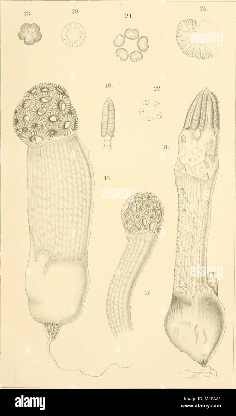 Annals of the Royal Botanic Gardens, Peradeniya (1901-1924) (18410445392) Stock Photo