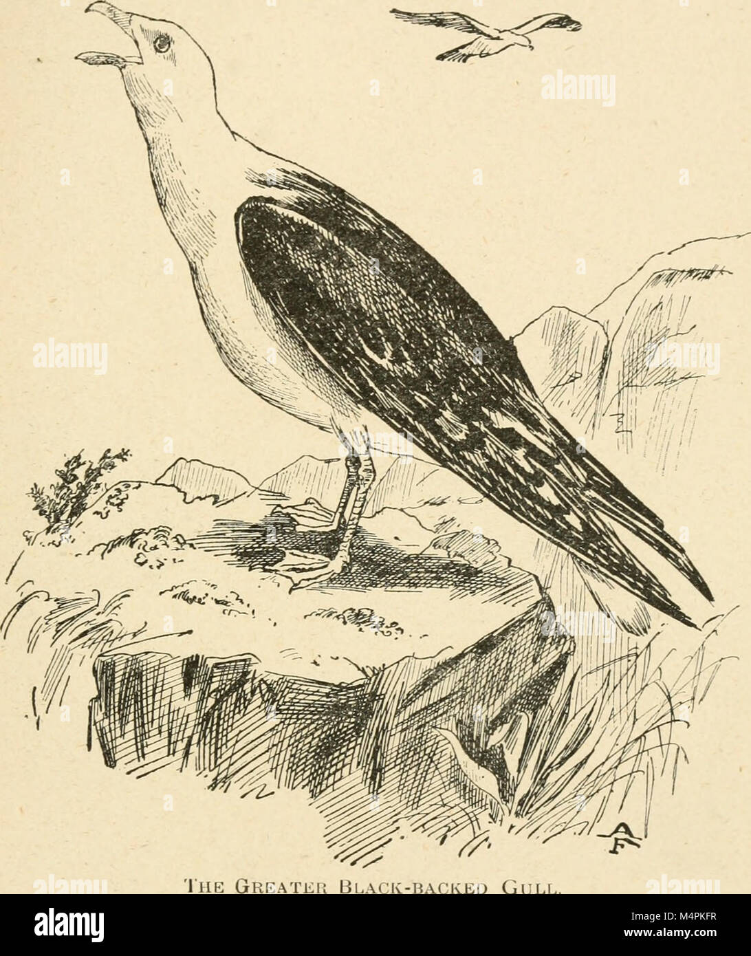 British birds for cages and aviaries; a hanbook relating to all ...