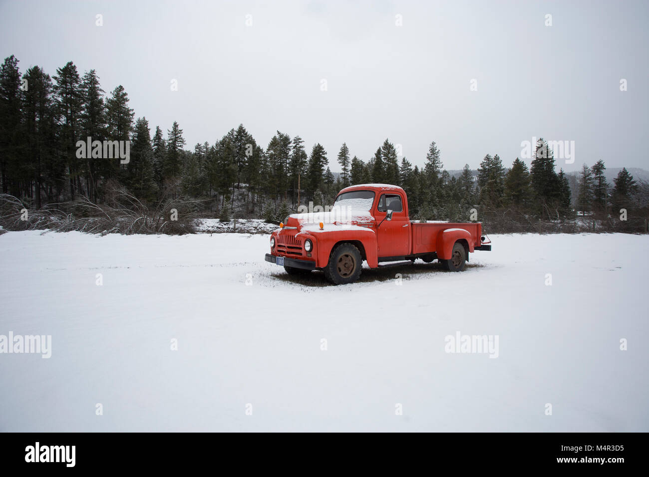 A snow covered 1952 International L130 pickup truck, in an