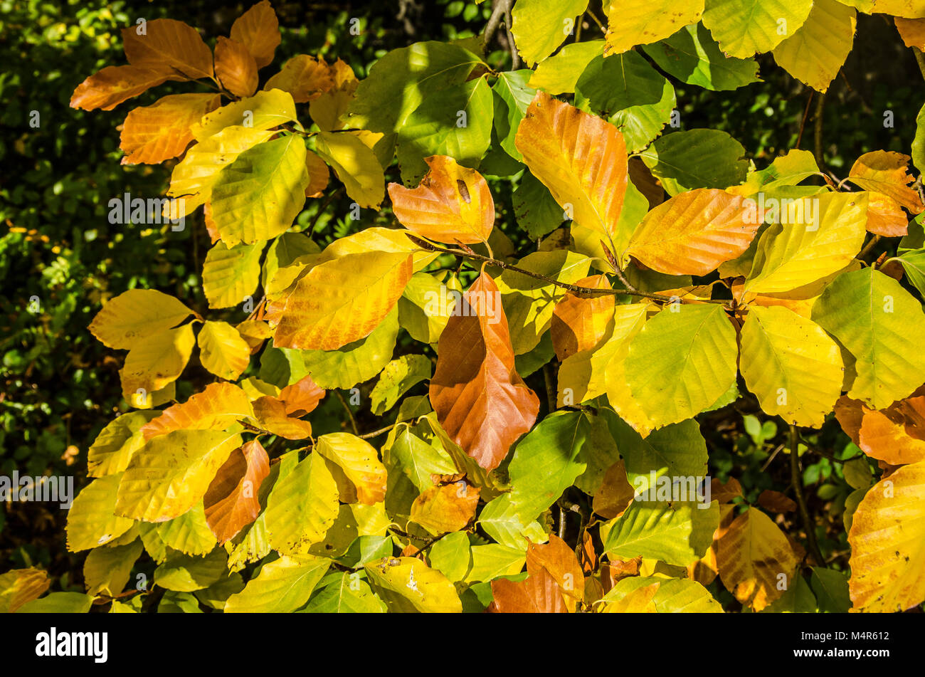 Autumn, also known as fall in American and Canadian English, is one of the four temperate seasons. Autumn marks - Stock Image