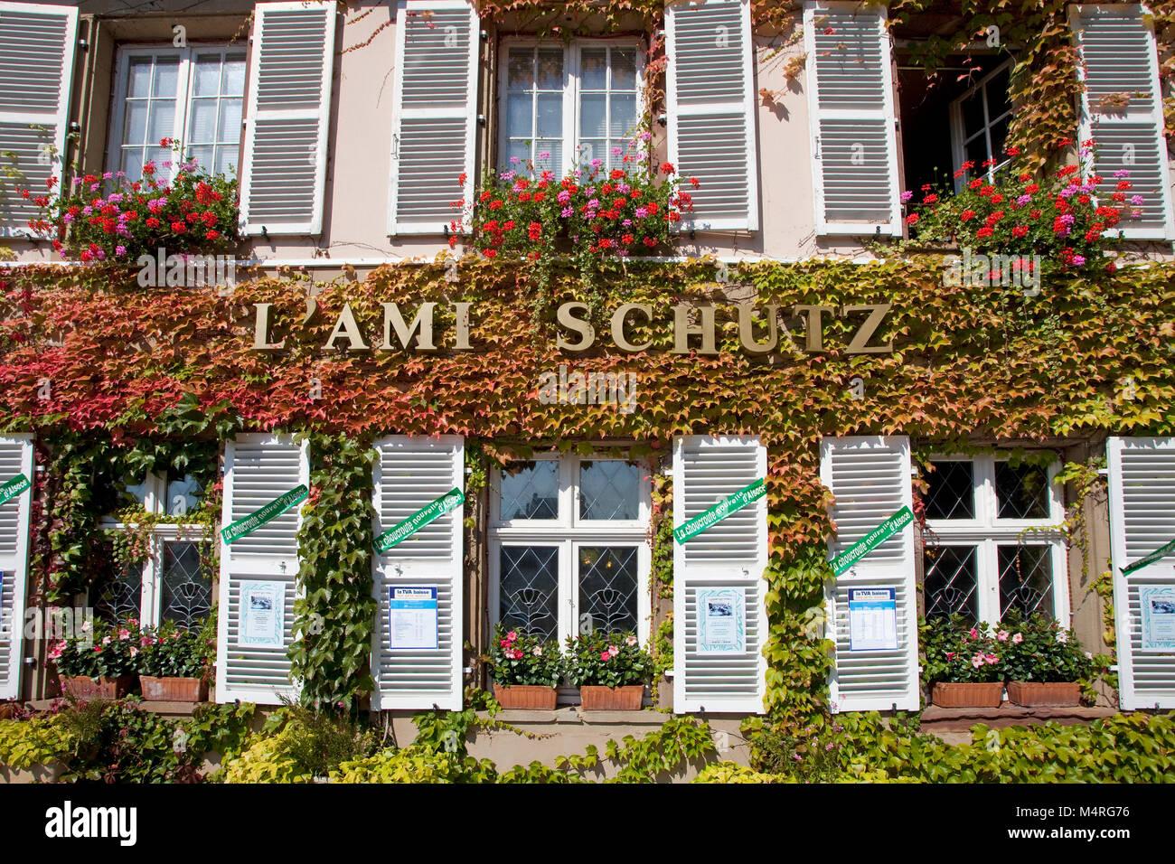 Autum colours, wine tendrils at restaurant, L' Ami Schutz, La Petite France (Little France), Strasbourg, Alsace, - Stock Image