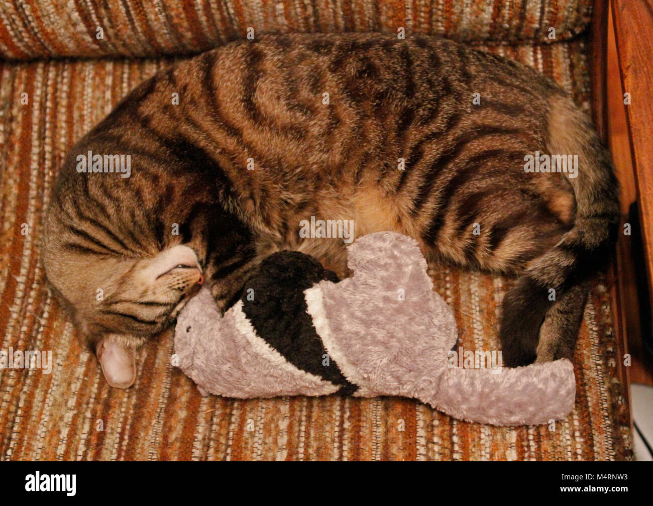 Cat And Stuffed Animal Stock Photos Cat And Stuffed Animal Stock