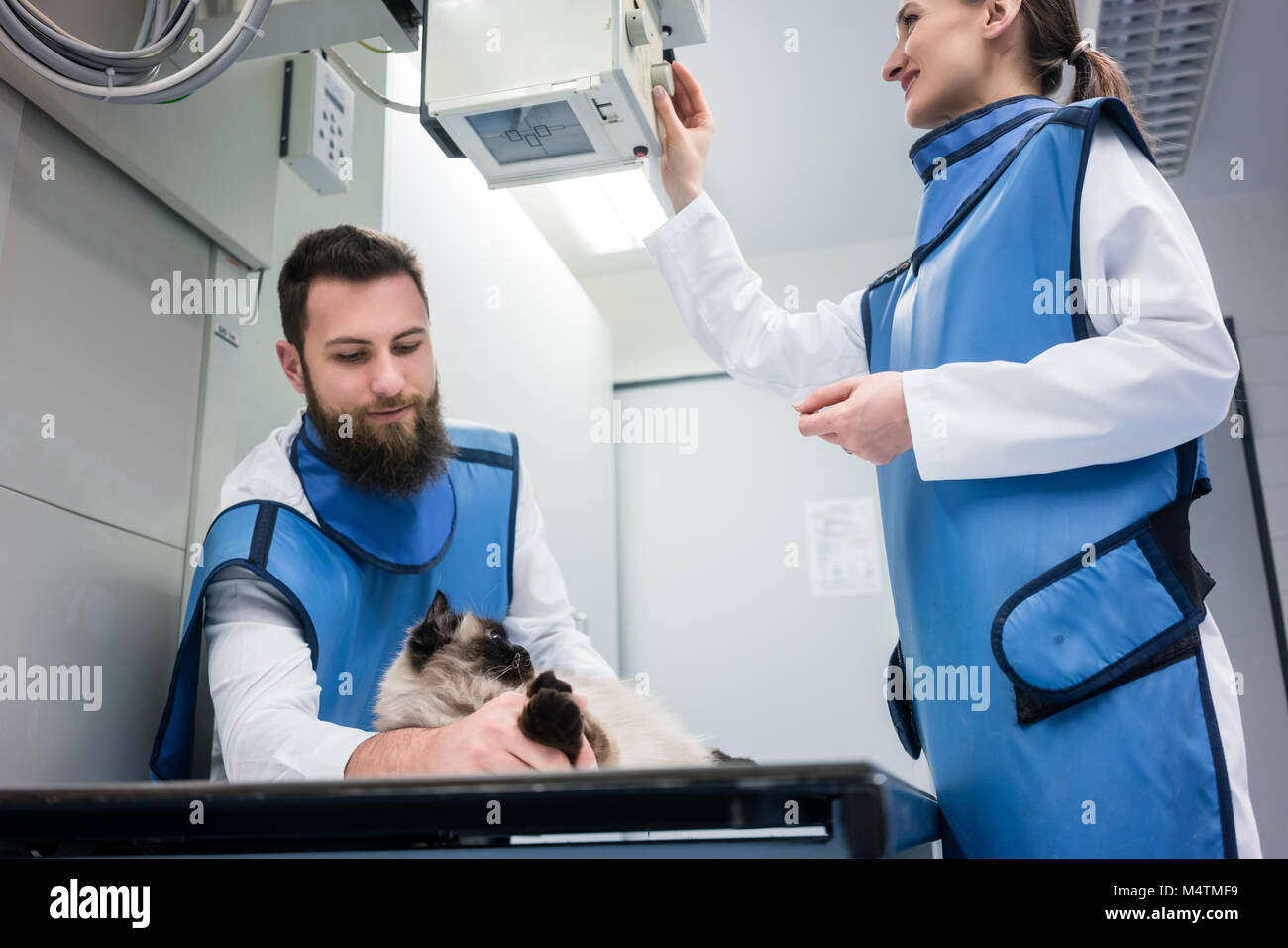 Veterinarians in X-ray room with a cat - Stock Image