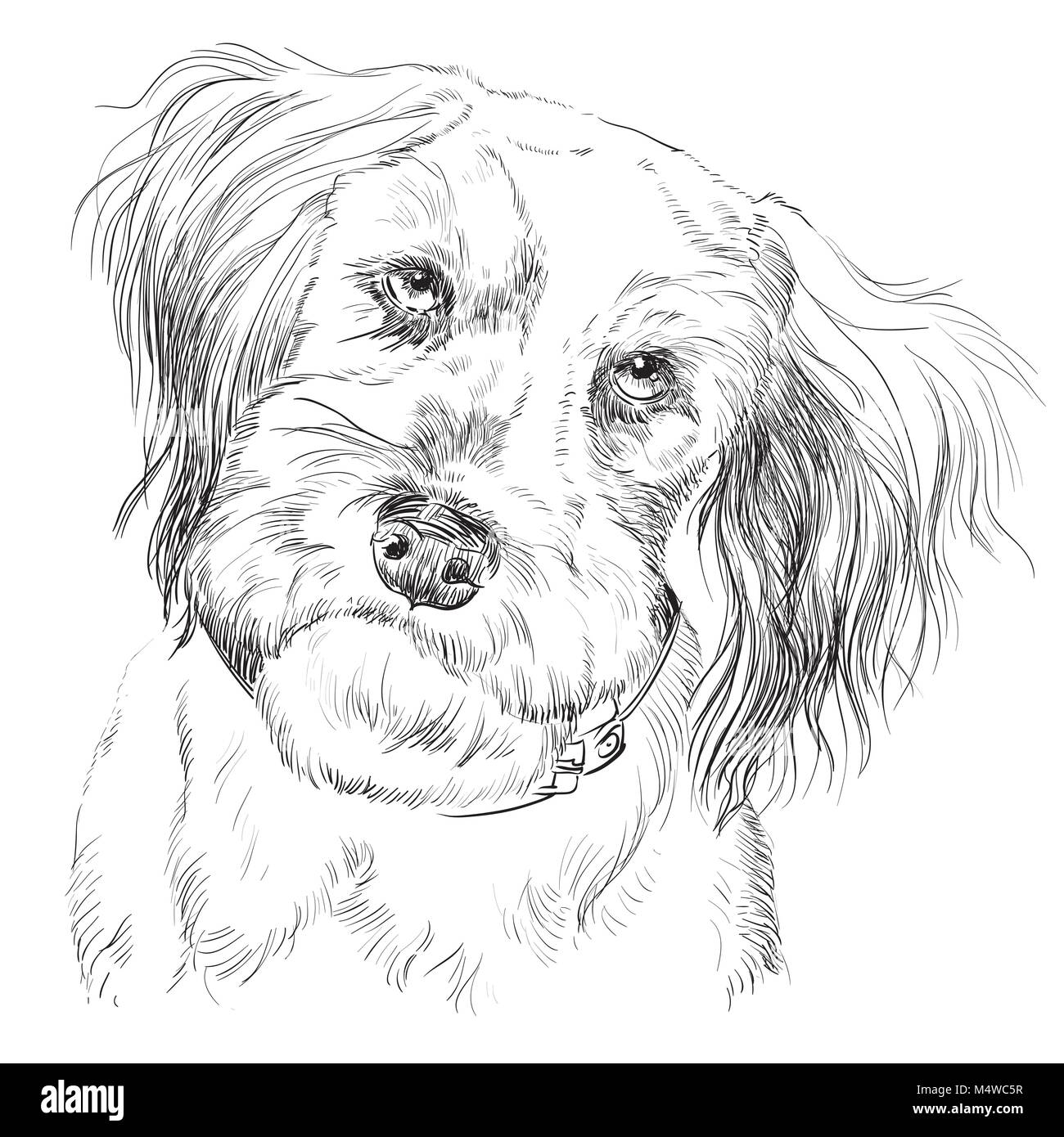 Fluffy mongrel dog vector hand drawing illustration in black color isolated on white background - Stock Vector