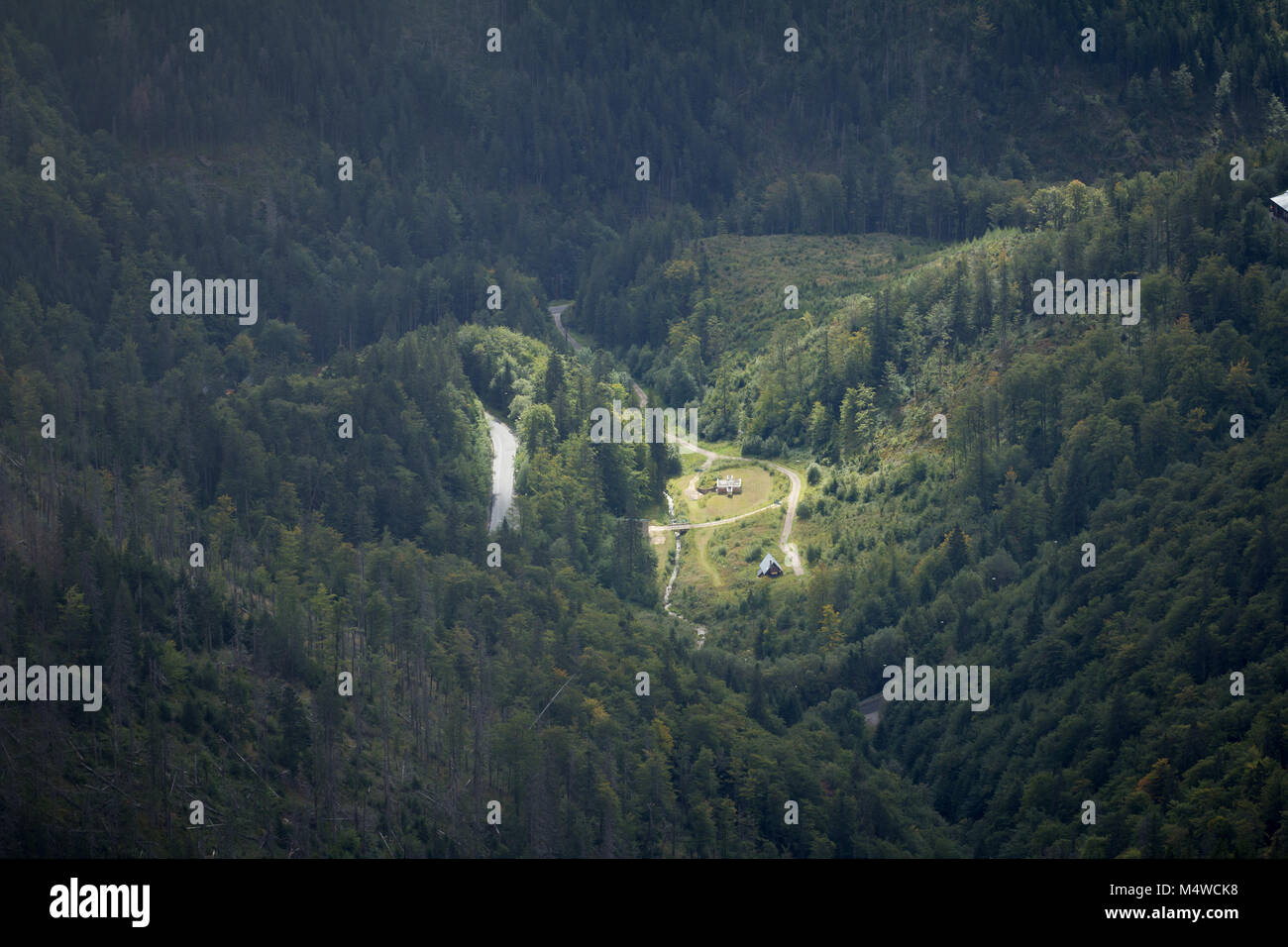 forest aerial view - Stock Image