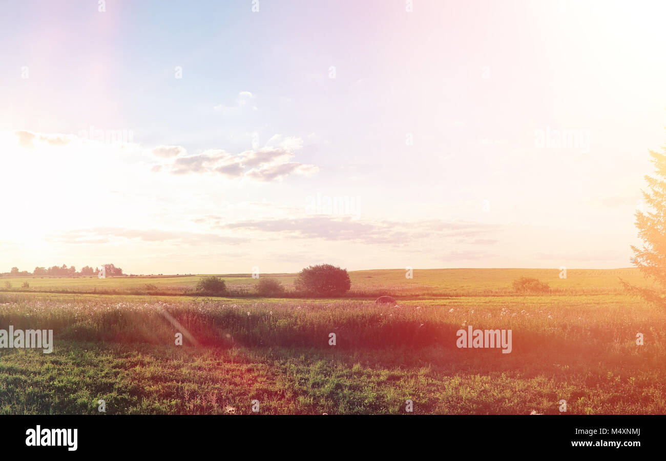 Landscape outside the city. Grassy field and blue sky. Sunset ov Stock Photo