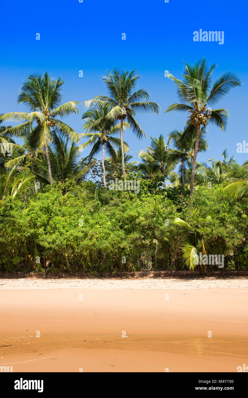 Coconut palm tree view from the beach - Stock Image
